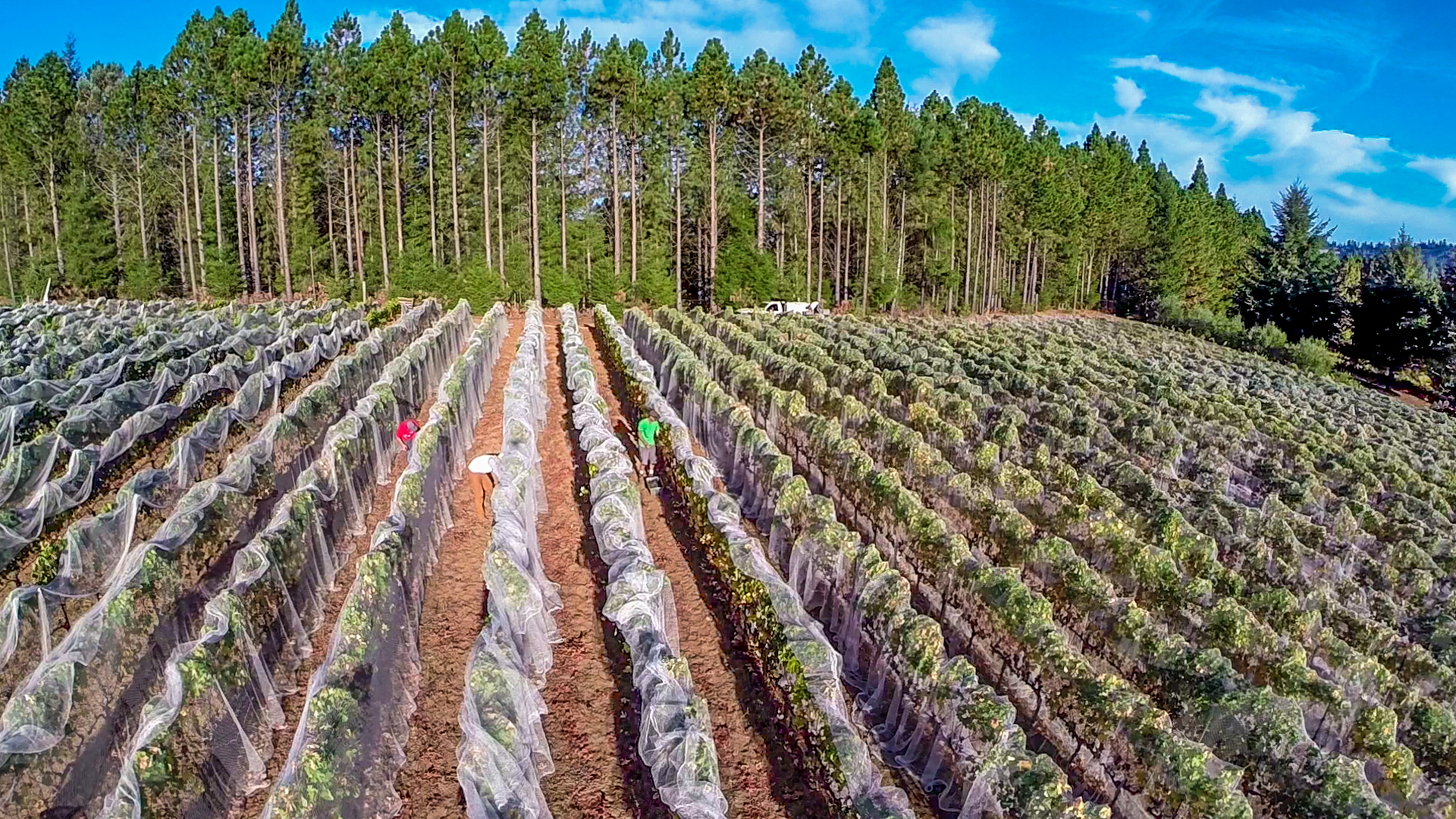 Aerial Photo Media films Harvest in Cazadero CA
