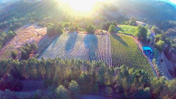 Drone Harvest
