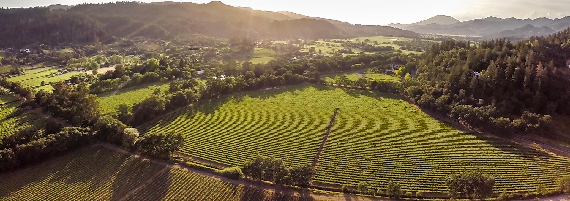 Drone Photography for Wineries